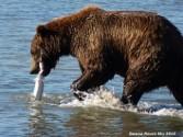 bear-sighting